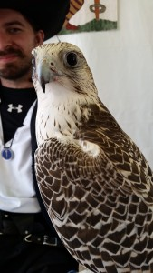 Winter, a Gyrfalcon