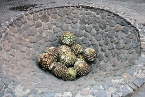 Stone baking pit with trimmed piñas. Photo by Ian Chadwick.
